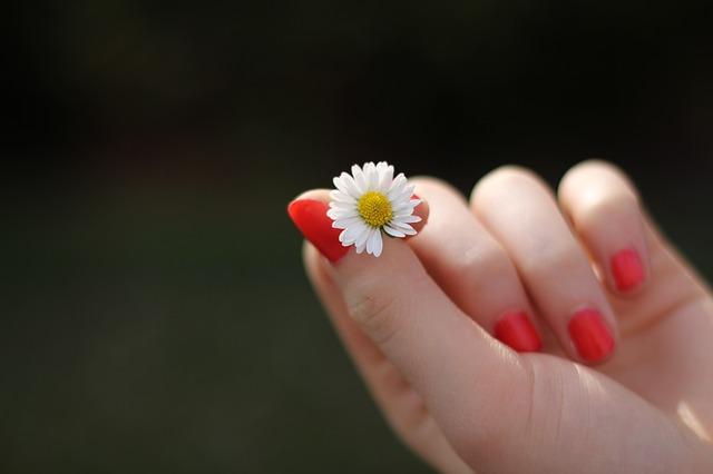 květ sedmikrásky