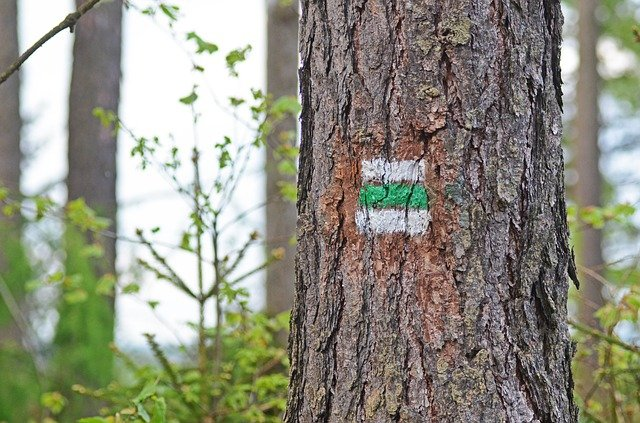 značka na stromu